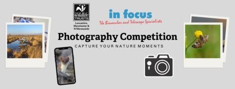 New photo comp banner