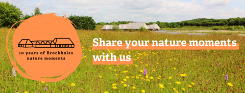 Brockholes share your nature moments banner