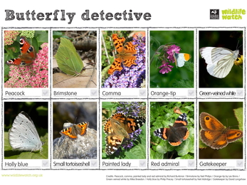 Butterfly Detective