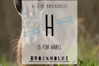 H is for...Hares