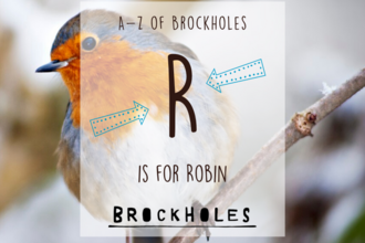 R is for... Robin