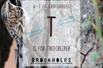 T is for... Treecreeper
