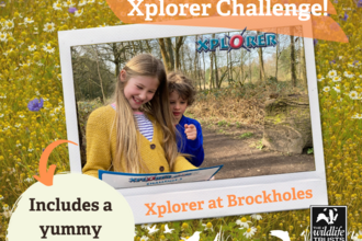 May Half Term Xplorer