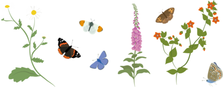 Pollinators and flowers illustration