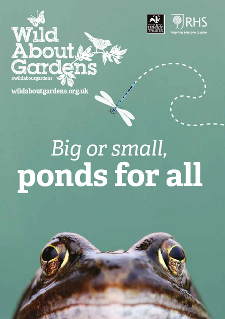 Big or small ponds for all Wild About gardens